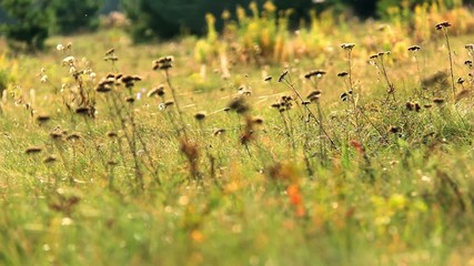 web in autumn grass
