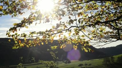 Herbstblätter im Gegenlicht