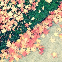 autumn leaves on grass and sidewalk