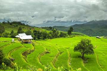 Rice fields ,landscape terraced agriculture of Ban Pa Pong Pieng