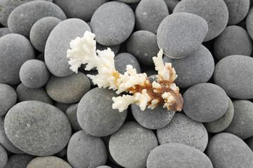 Sea coral ,pebbles on gray pebbles