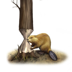 North American Beaver gnawing the tree