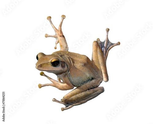 Tuinposter Kikker tree Frog