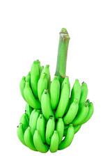 Banana bunch on tree isolated