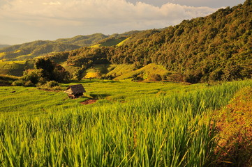 Rice Terraced Fields on Mountains
