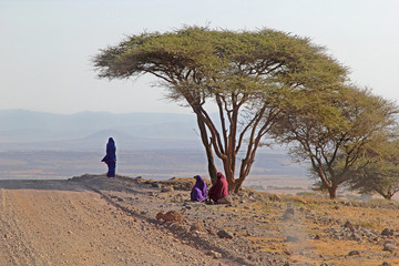 Group of Maasai under an acacia tree