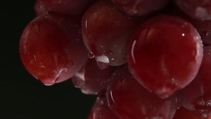 Red grapes with water drops. Studio macro shot