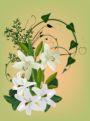 white lily flowers on light green background