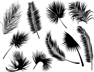 ten black fern and palm ten leaves on white