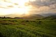Sunset on Rice Fields Landscape