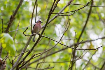 Little bird sitting on the tree