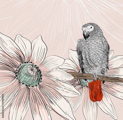 parrot © Tapilipa