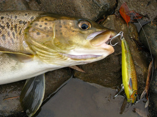 Fishing - lenok trout Siberia Mongolia