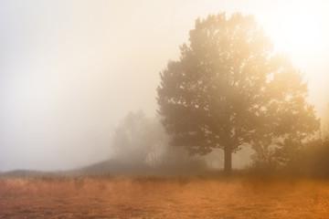 Fresh foggy morning on a wild meadow