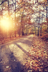 Colorful and sunny autumn forest path