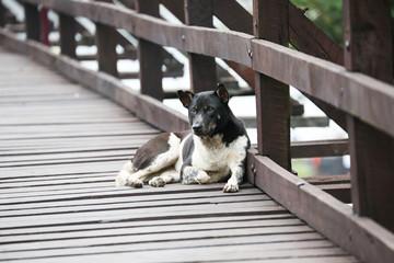 dog sleep on woodbridg  west of thailand
