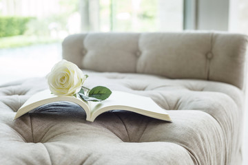 Book on sofa with white rose