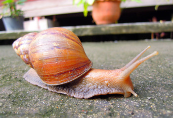 snail livelihood in garden