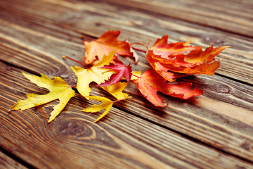 Colored autumn leaves on wooden planks
