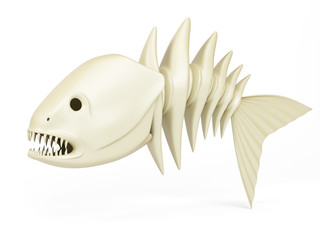 Skeleton of predator fish