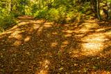 Waldweg mit herbstlich verfärbtem Laub