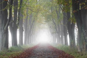 Kastanienallee im Nebel © Matthias Buehner