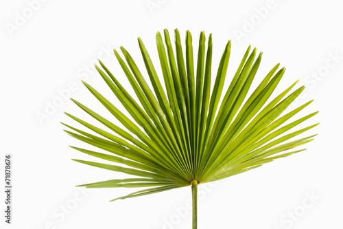 Fotobehang Palm boom Palmblatt, Freisteller, Studio