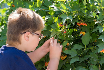 Boy with glasses considering viburnum berries