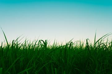 薄明中の草原