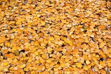 .fallen leaves background