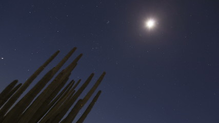 Timelapse Organ Pipe Cactuses zoom out
