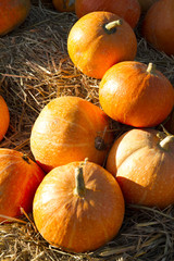 Autumn pumpkins on straw