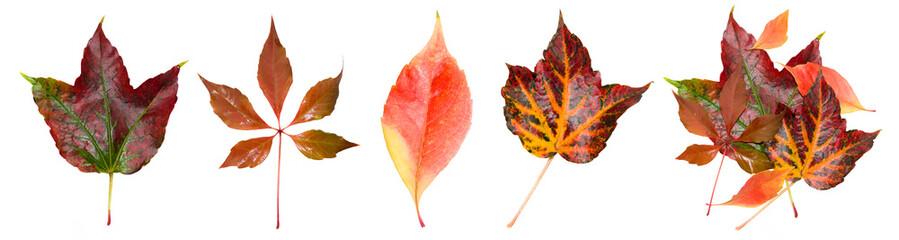 Herbstblatt Set
