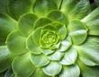 Cactus close up - 71888846