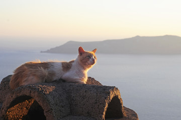 Cat near the sea at sunset
