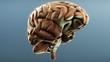 Gehirn Übersicht
