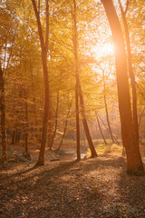 Autumn forest in sunrise