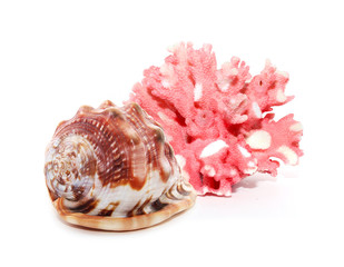 Coral and shell isolated on white background