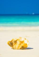 Idyllic Image Beach Pearl
