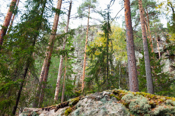 Rock in forest