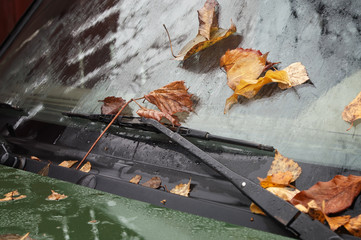 The Leaves on a Windshield