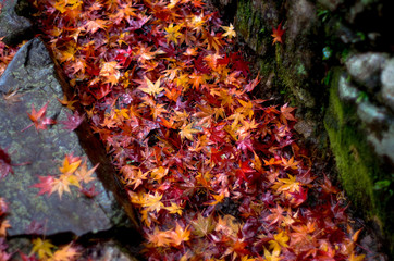 落ち葉と石畳