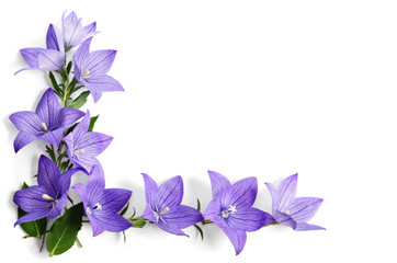 Photo corner made of Bellflowers isolated on white background
