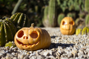Halloween scary pumpkins on the cactuses backgroung