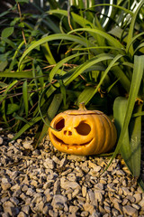 Halloween scary pumpkin in the gren grass brushwood