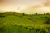 Sunrise over vineyards, Tuscany, Italy