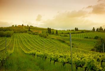 Sunrise over vineyards, Tuscany, Italy