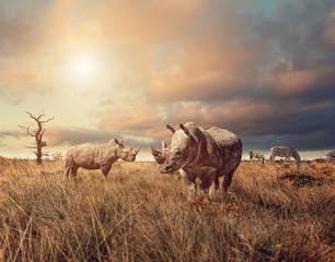 Rhino standing in grassland