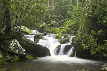 Relaxing scenic in the Great Smoky Mountains