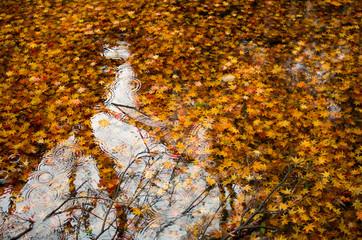 落ち葉の池と反射